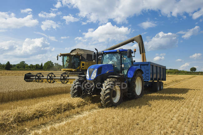 Combine harvester delivering harvested grain — Stock Photo