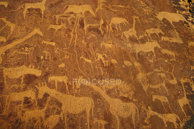 Rock art engravings — Stock Photo