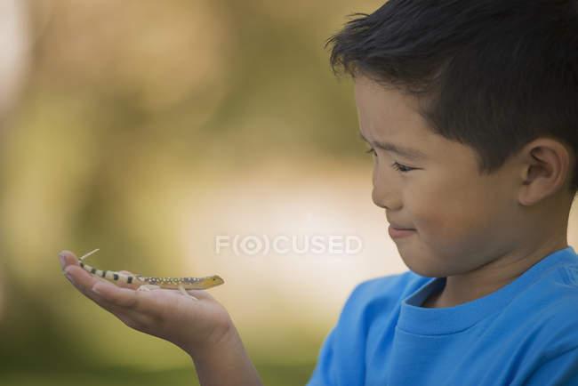 Мальчик, держащий гецко — стоковое фото