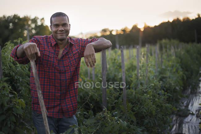 Agricoltore con piante di pomodoro — Foto stock