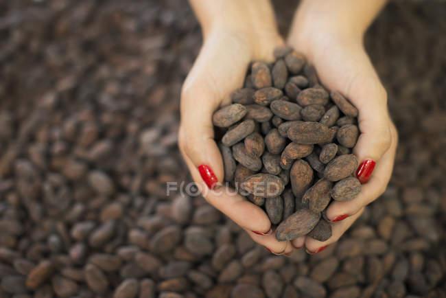 Органічного виробництва шоколадних виробів — стокове фото