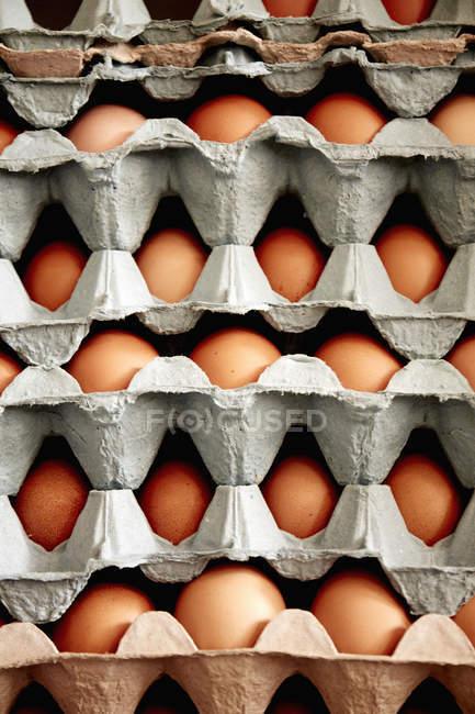 Plateaux d'œufs biologiques — Photo de stock