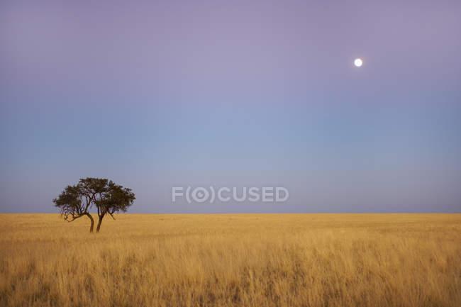 Luna llena sobre llanuras cubiertas de hierba - foto de stock