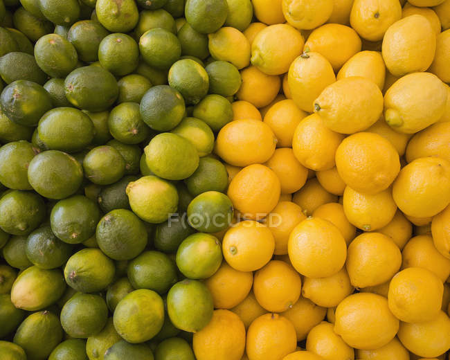 Lemons and limes, citrus fruits — Stock Photo