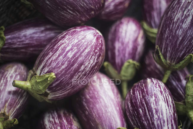Natural pattern with purple eggplants. — Foto stock