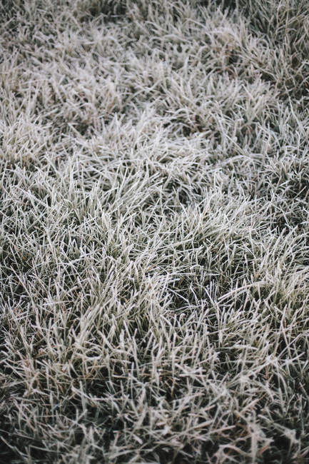 Light frost on the grass. — Stock Photo