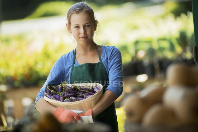 Farmer with Organic Japanese Eggplants — Stock Photo