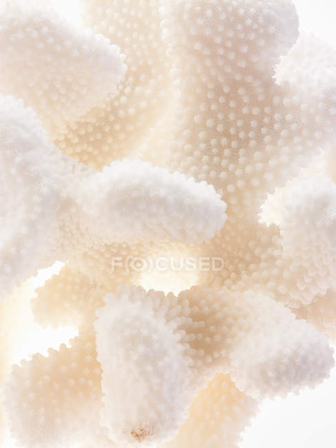 Delicate textured cream coloured objects — Stock Photo
