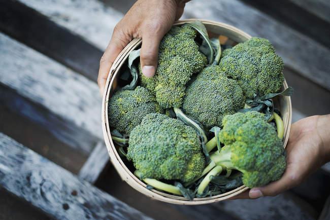 Brocoli bio juste récolté — Photo de stock