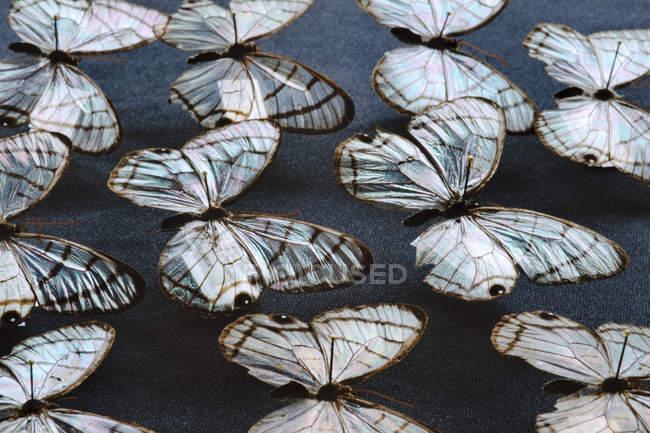 Verre à voilure papillons — Photo de stock