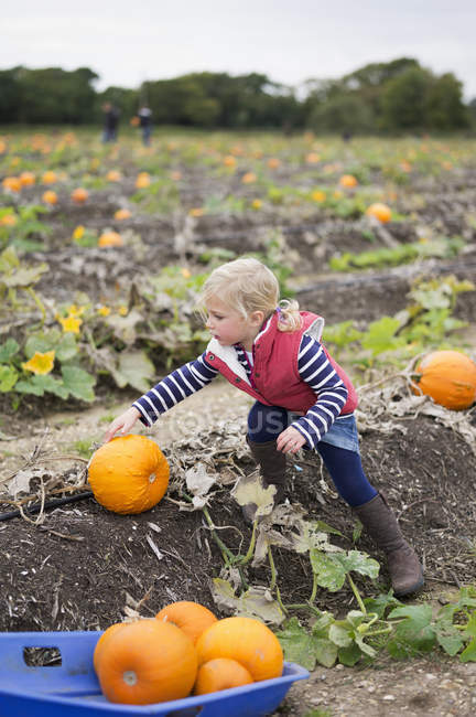 Девушка тянется за оранжевыми тыквами — стоковое фото