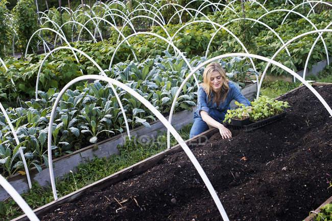 Organic Vegetable Garden — Stock Photo