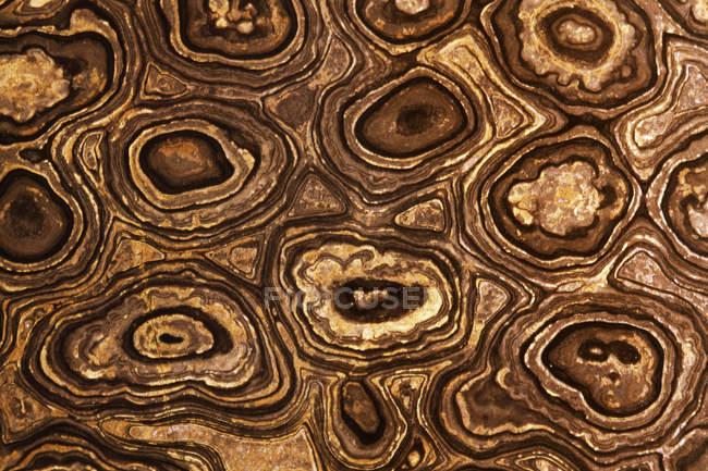 Stromatolite fossil, close up — Stock Photo