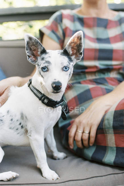 Woman and a small dog — Stock Photo