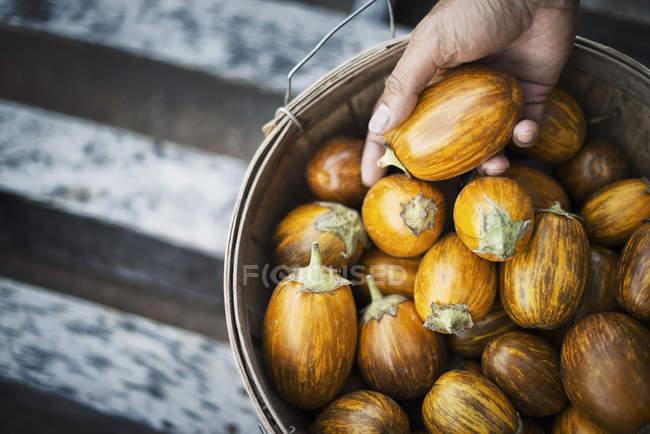 Organic Turkish Orange Eggplants — Stock Photo