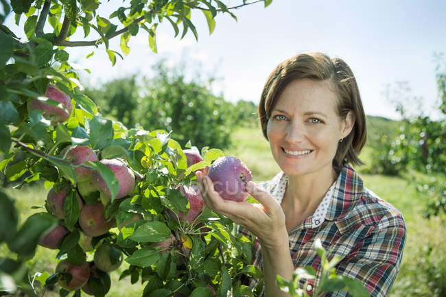 Woman in a plaid shirt picking apples — Stock Photo