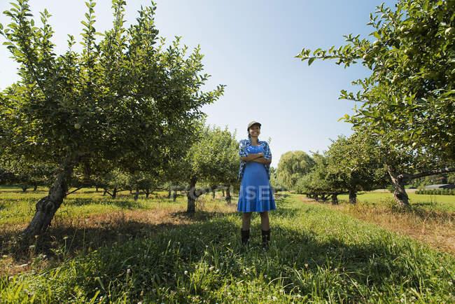 Woman picking apples — Stock Photo