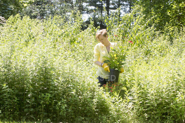 Woman among dense plantings of flowers — Stock Photo