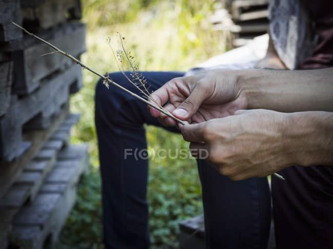Man sitting in shade holding plant stalks — Stock Photo