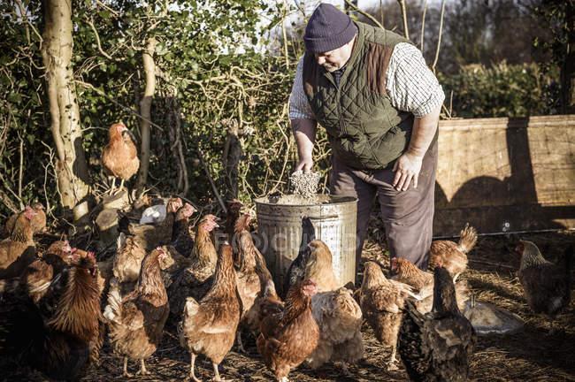 Agricultor cercado por galinhas . — Fotografia de Stock