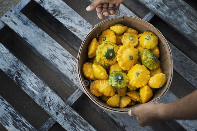 Organic Patty Pan Squash — Stock Photo