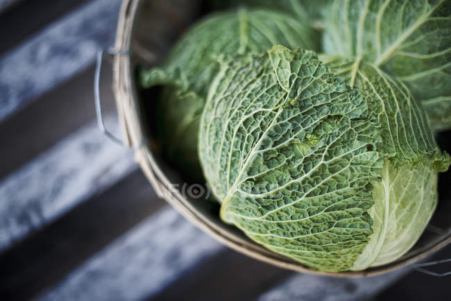 Organic Cabbages just harvested — Stock Photo