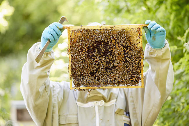 Beekeeper holding frame full of honey — Stock Photo