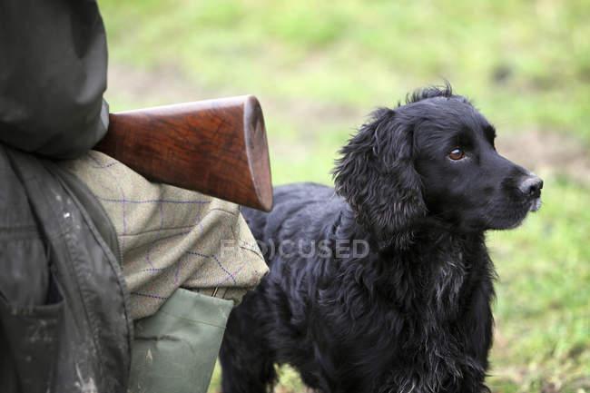 Alert black trained gundog — Stock Photo
