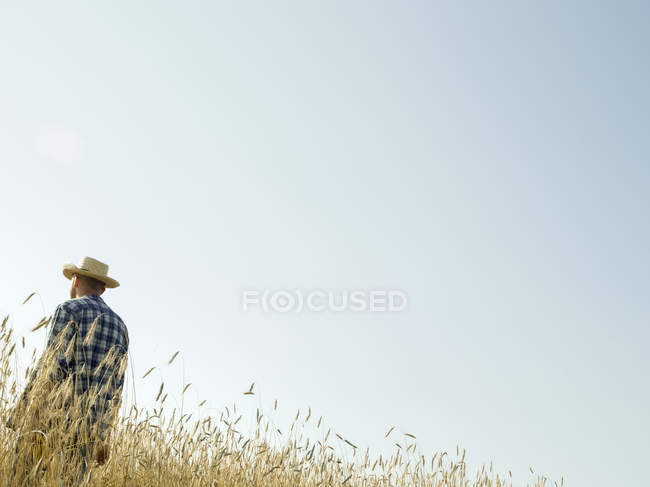 Man standing in a field of wheat crop — Stock Photo