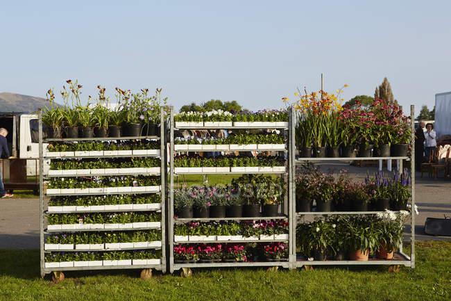 Садові рослини для продажу — стокове фото