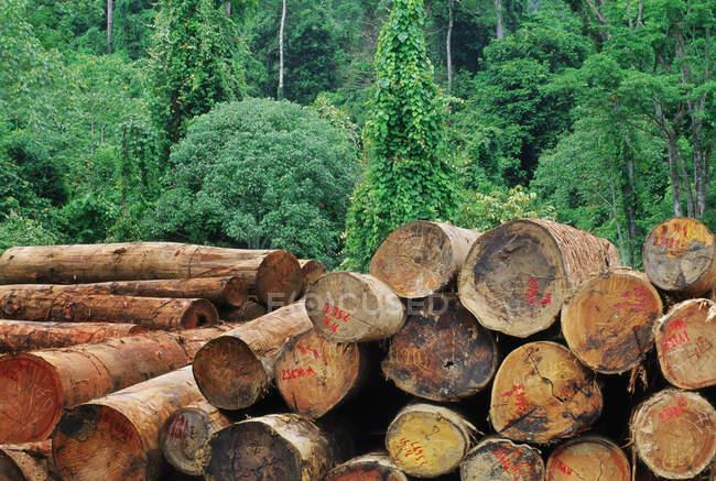 Exploitation forestière dans la forêt pluviale des basses terres — Photo de stock