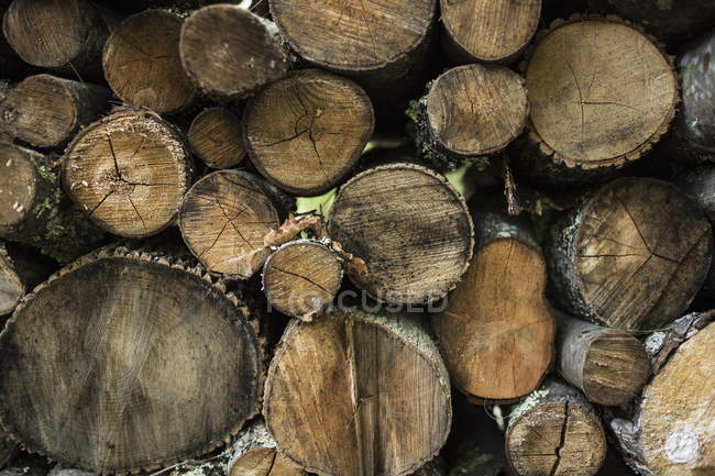 Logs stacked in a pile — Stock Photo