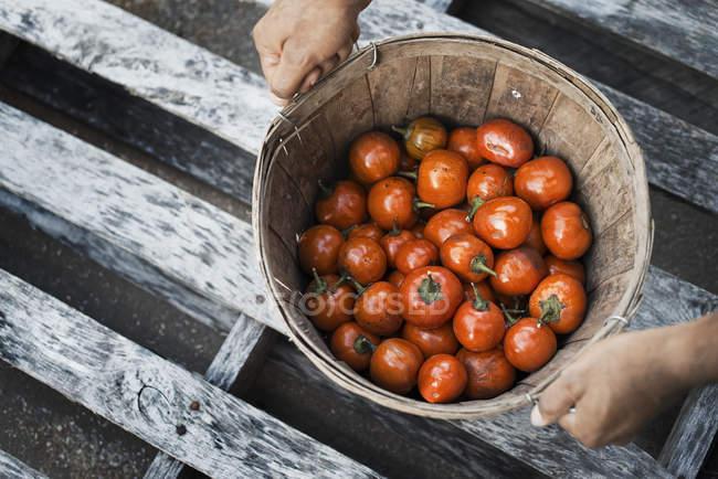Organic Hungarian Eggplants — Stock Photo