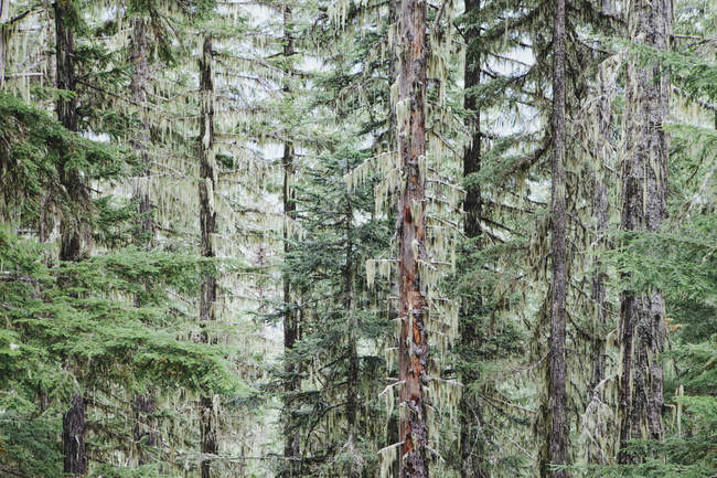 Green temperate forest — Stock Photo