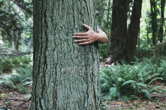 Homem abraçando árvore — Fotografia de Stock