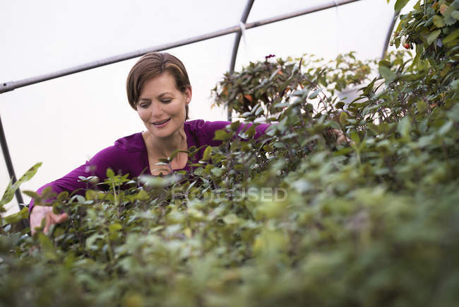 Woman working on trays of leafy plants — Stock Photo