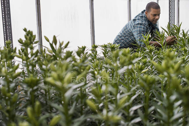 Людина, які працюють у великих парникових — стокове фото