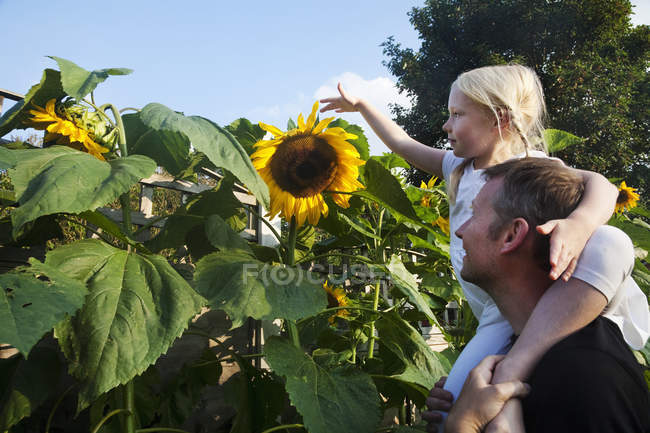 Girl seated on her father's shoulders — Stock Photo