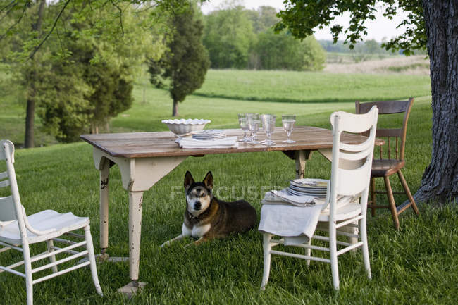Table laid in a garden,  dog on guard — Stock Photo