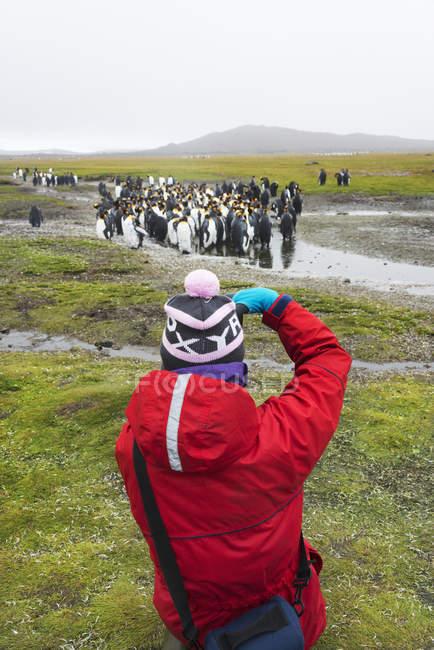 Persona che fotografa Re Pinguini — Foto stock