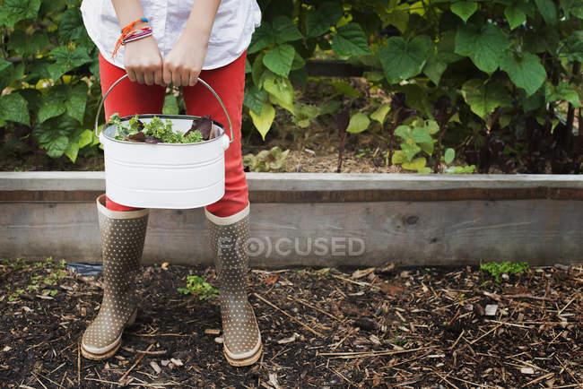 Девушка, перевозящих ведро листьев салата — стоковое фото