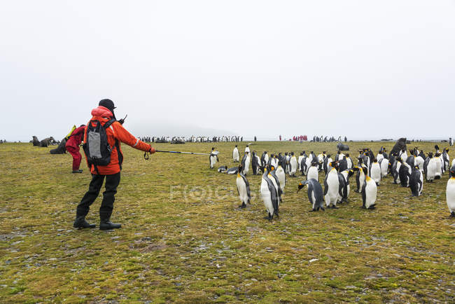 People watching colony of Penguins — Stock Photo