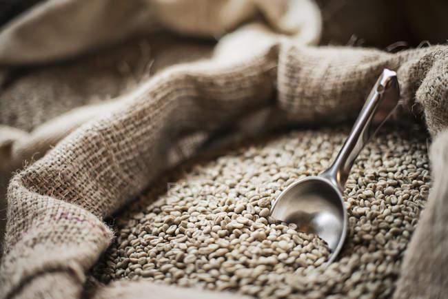 Full hessian sacks of beans — Stock Photo