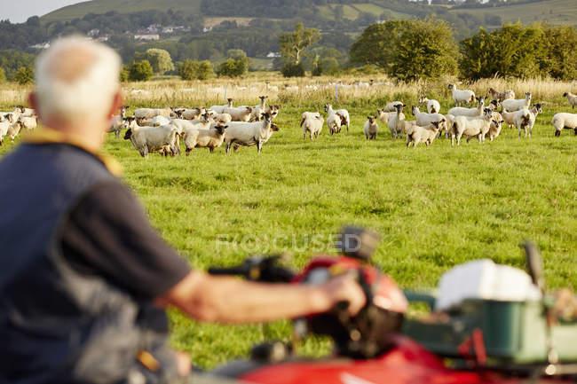 Mann auf einem Quadbike mit Blick auf seine Tiere — Stockfoto