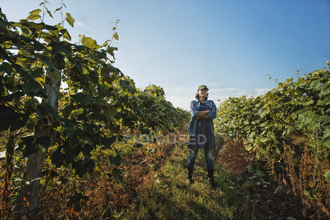 Woman tending the growing grape vines — Stock Photo