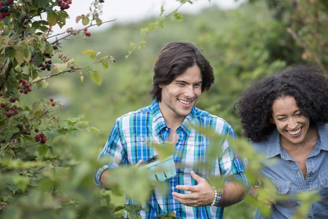 Couple among the fruit bushes. — Stock Photo