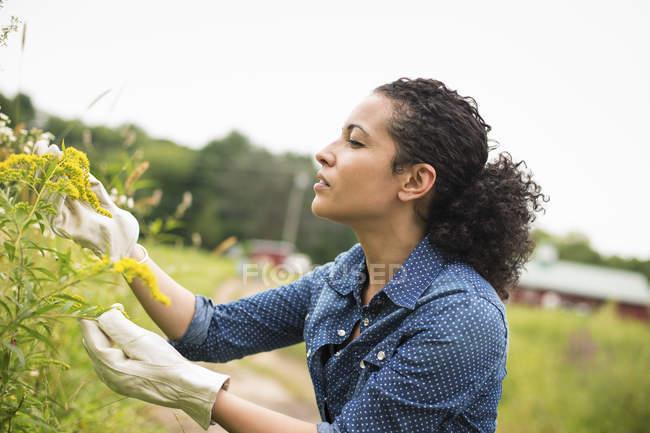 Woman working on an organic farm. — Stock Photo