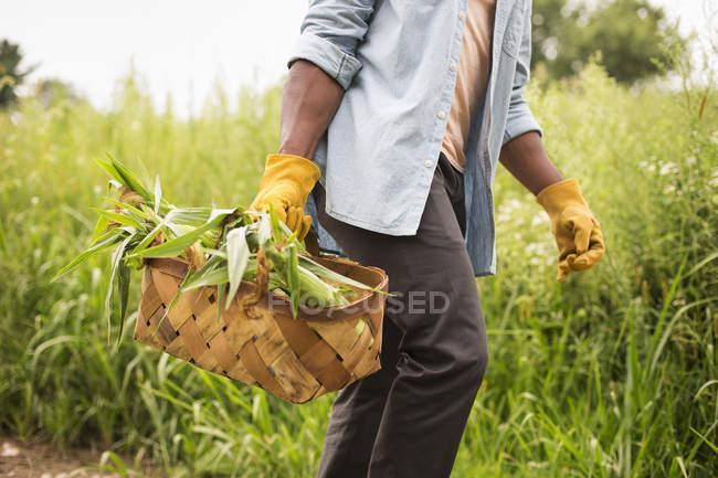 Man holding basket of fresh corn — Stock Photo