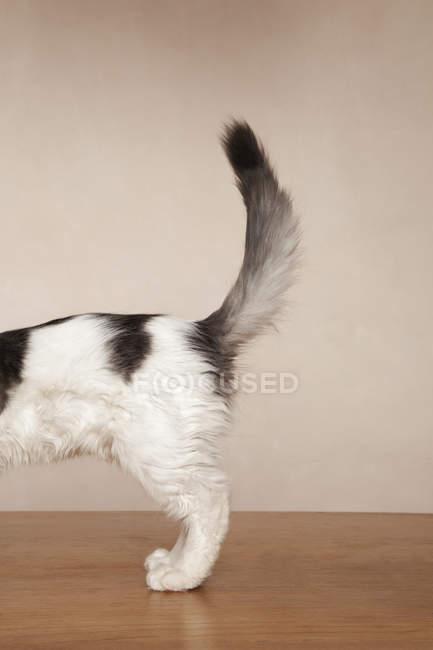Молодий кошеня з латки — стокове фото