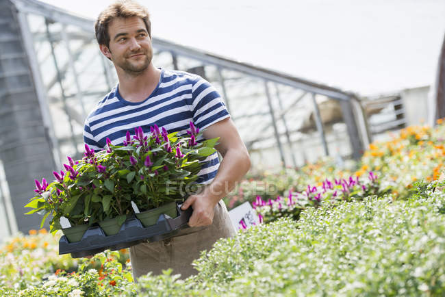 Man working in greenhouse. — Stock Photo